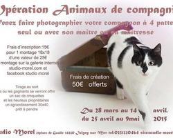 Studio Morel - Isigny-sur-Mer - Galerie photo - Opération Animaux de Compagnie